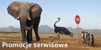 promocje w serwisie volkswagena w warszawie